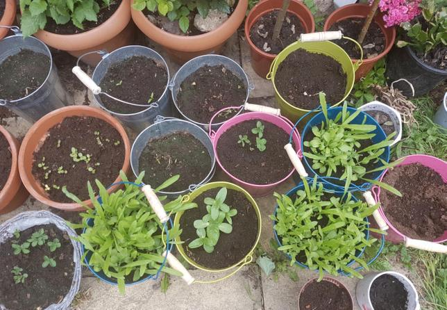 Isuni planted a variety of vegetables and flowers.