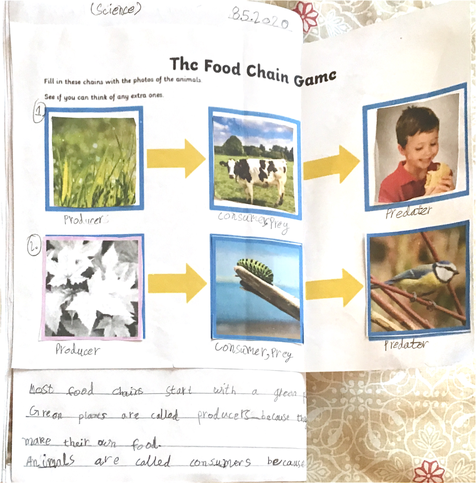 Food Chain by Fahad