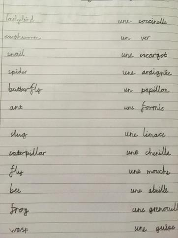 French names for mini beasts Affan⭐️⭐️⭐️