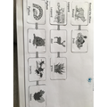 Taranvir's food chain