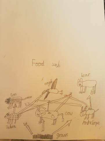 Food Web by Aayus