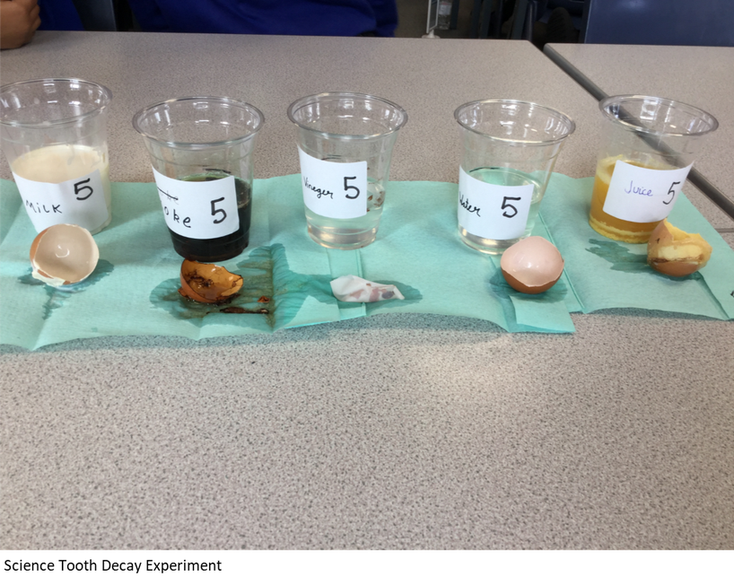 Science tooth decay experiment