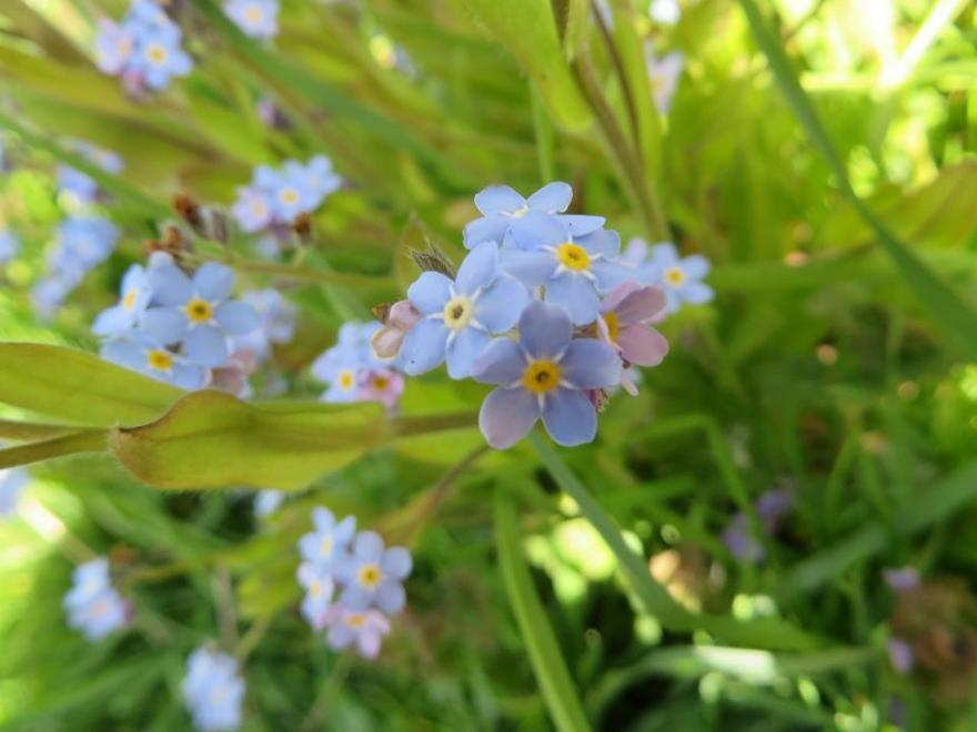 Forget me nots were scattered across the park