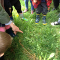 Looking for minibeasts in the grass.