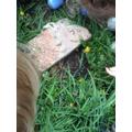 We found an ants nest.