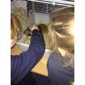 Pebbles our class pet
