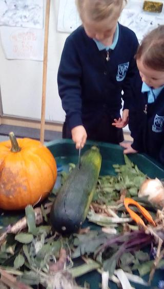Exploring and investigating vegetables grown locally.