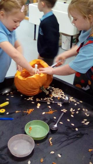 Finding out what is in a pumpkin.