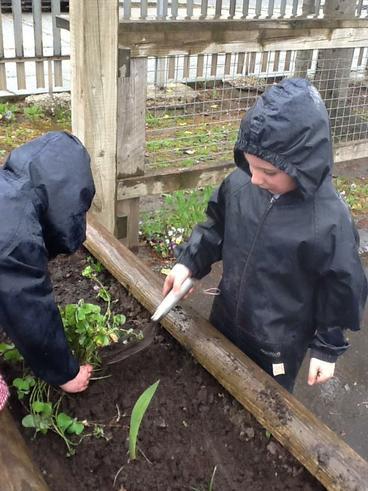 More planting fun