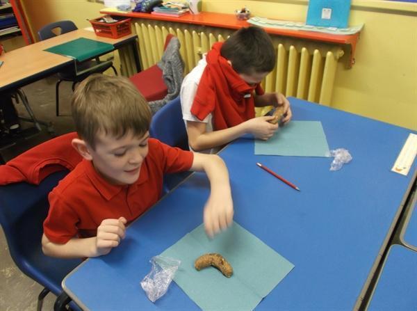 Anglo - Saxon Poo investigation