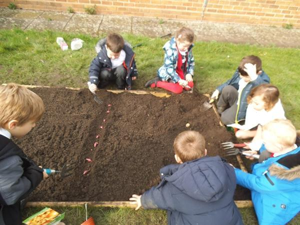 Science week. Time to plant our allotment.