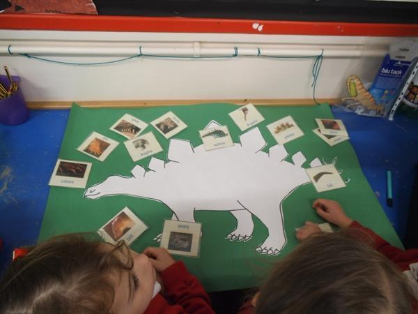 I can identify parts of a dinosaurs body!