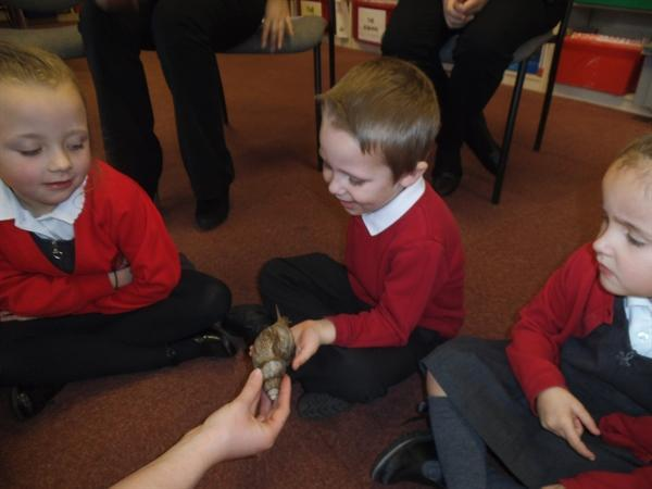 Science week. A giant African snail.