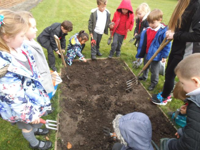 We hope our vegetables grow in our allotment!