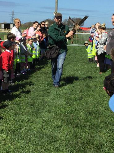 Meeting the birds of prey