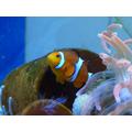 We also found Nemo!