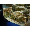 Big crab's friends!