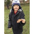 We found a 'lobed' leaf.