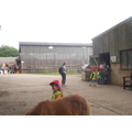 Feeding the lambs and grooming the pony