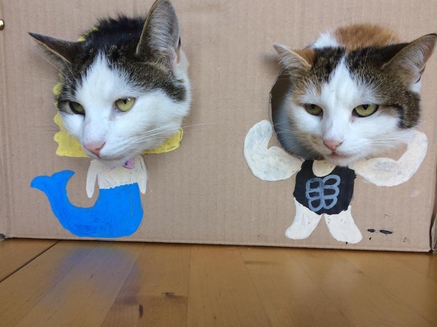 Emma's cat photobooth