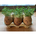 Grow your own cress.