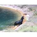 The 'honking' sea lion - wanting her lunch!