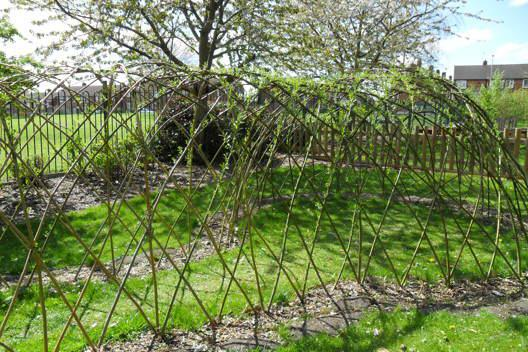 The willow dome in spring