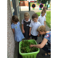 Reception children growing lettuce