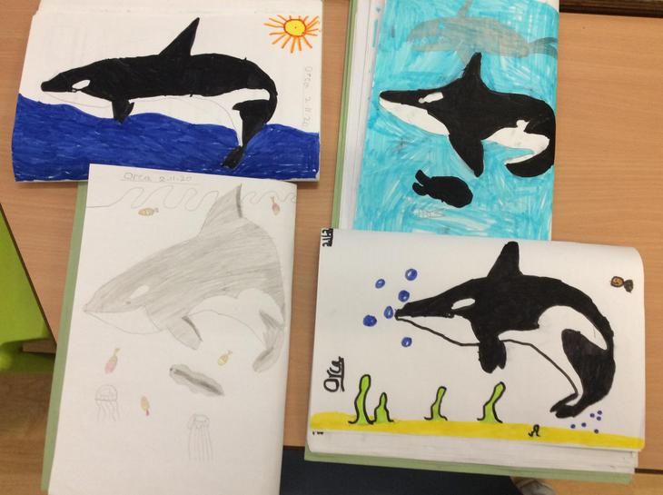 Feel free to ask Class 3 for some top orca facts!