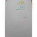Blake's detailed observational daisy drawing.