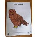 Nikodem has carefully coloured the owl.