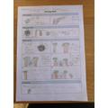 Flo's planning sheet