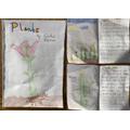 Y1 Plant Book