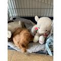 My dog and bear
