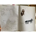 Bear Fact File