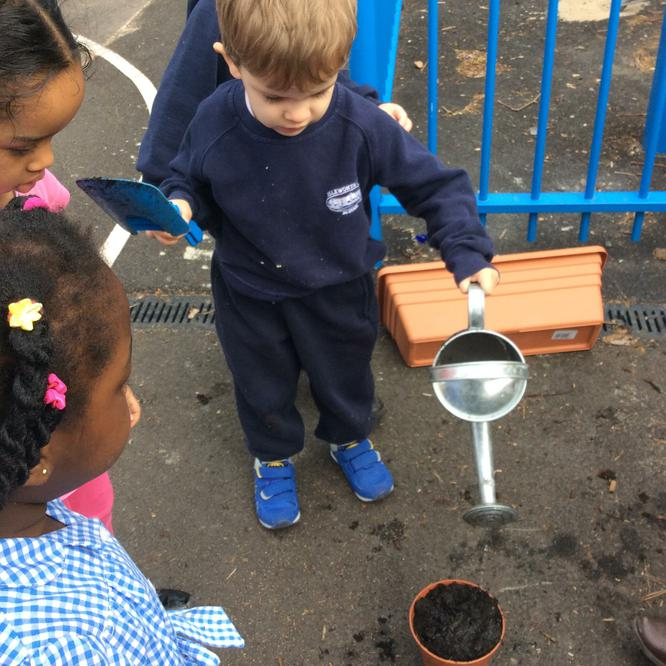 watering the newly planted seeds.