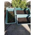 Sophia's Gardening