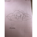 Amira's rose