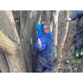 exploring forest school