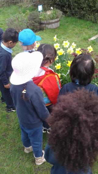 Looking at the Spring flowers.