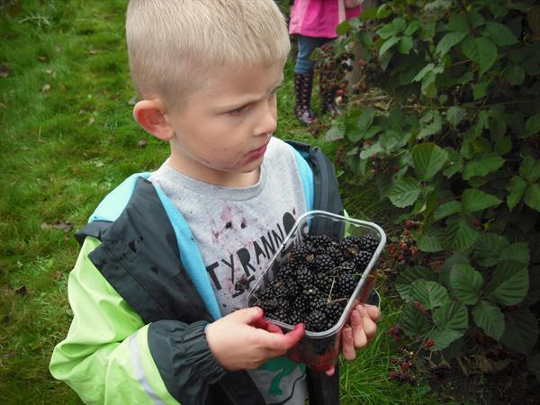 He has lots of blackberries