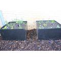 New Springtime plants