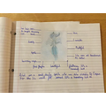 Description of Ariel