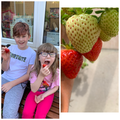 Enjoying the strawberries they have grown!