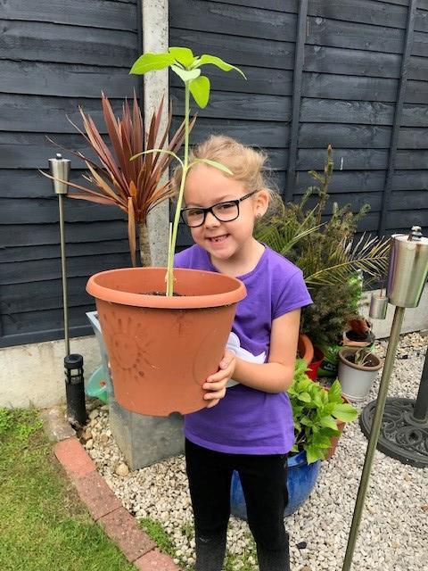 Evie's Sunflower