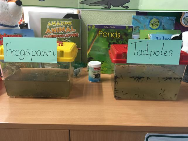 Our teachers sorted them into 2 tanks