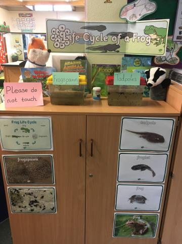 Our tadpole display