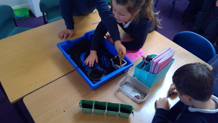 Planting and Germination