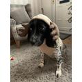 Mrs Hart's dog - Riley