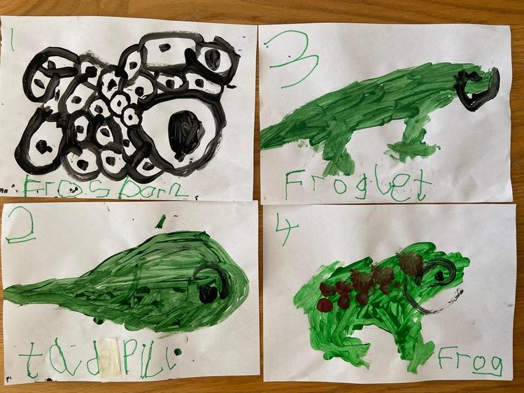 'Life Cycle of a Frog', Freddie, Class R